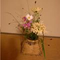 20080924(茶花)