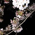 20090409(お花見3)