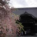 20090412(尾道5)