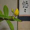 20090603(茶花)
