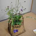 20090910(茶花)