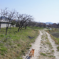 20100327(お散歩)