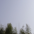 20100504(sky)