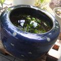 20100505(火鉢)