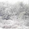 20070107(雪国)